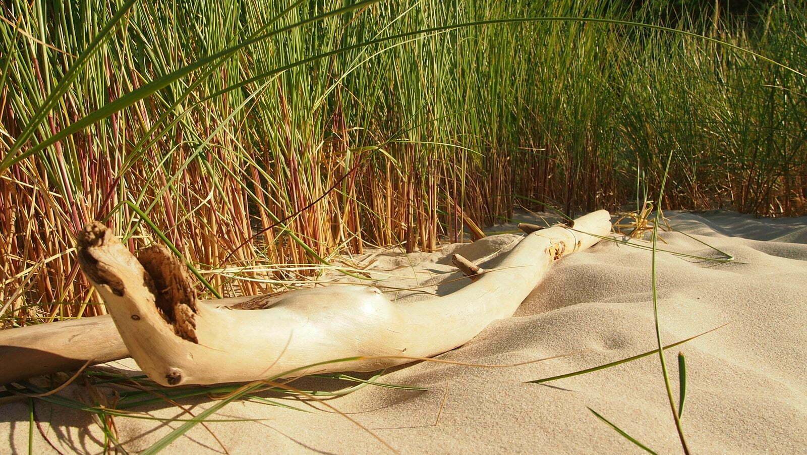 patyk na plaży