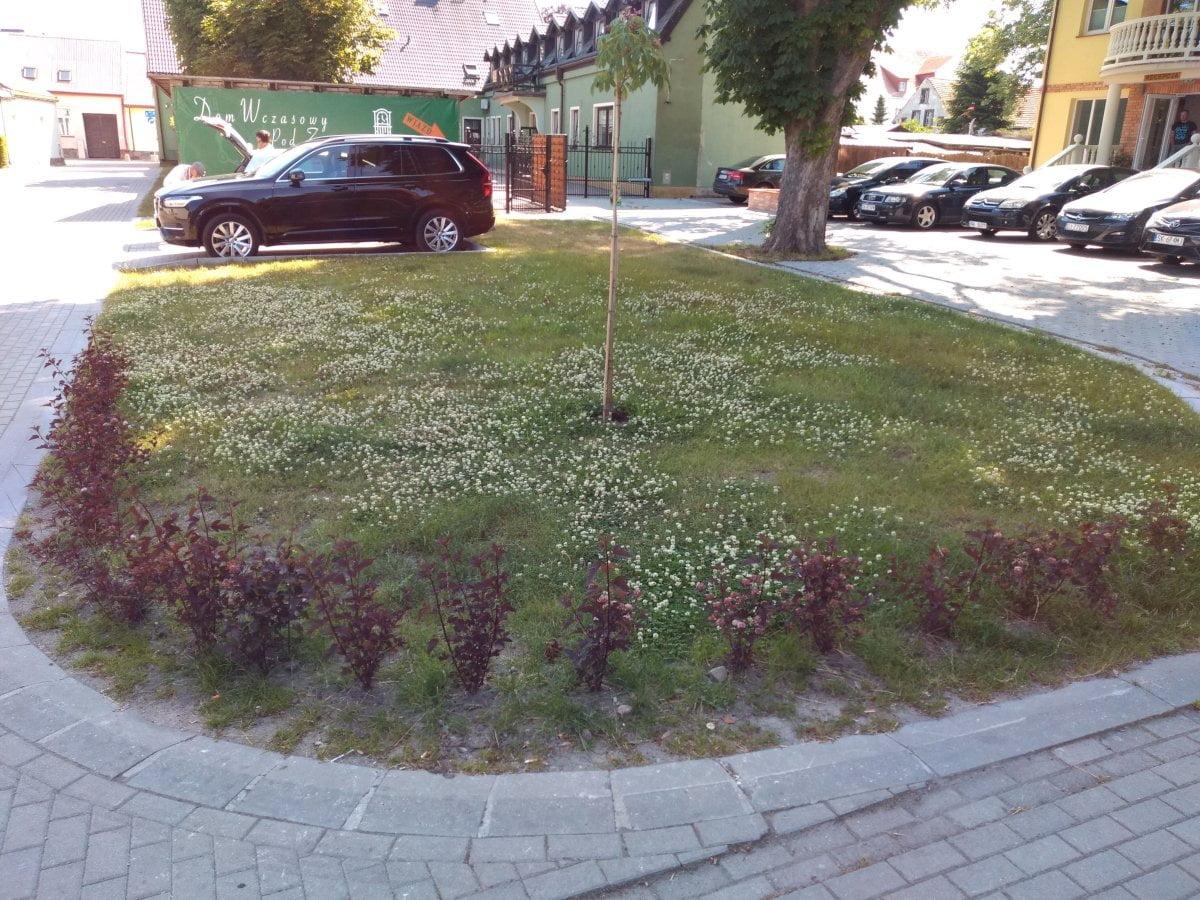 Miejska zieleń